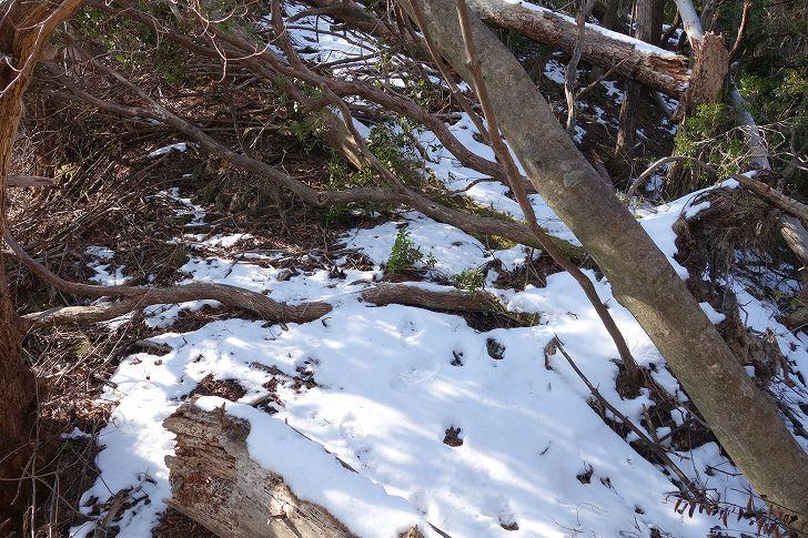 雪が残る山林