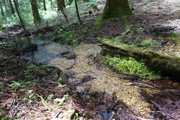 山林の小川