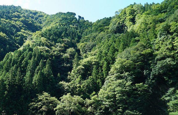 日本の山林