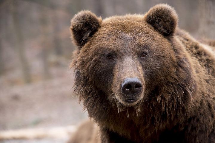 野生動物 熊
